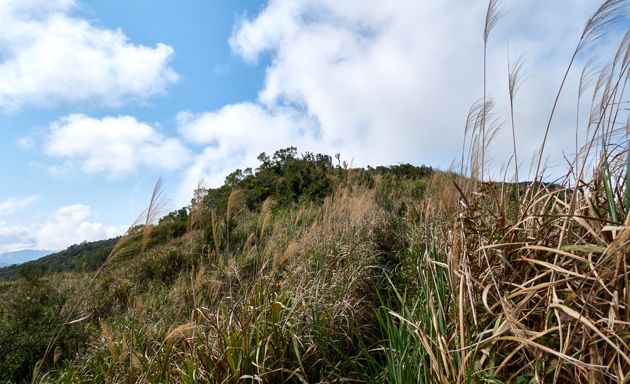Tall grass on either side of trail - going up mountainn - blue sky and white clouds
