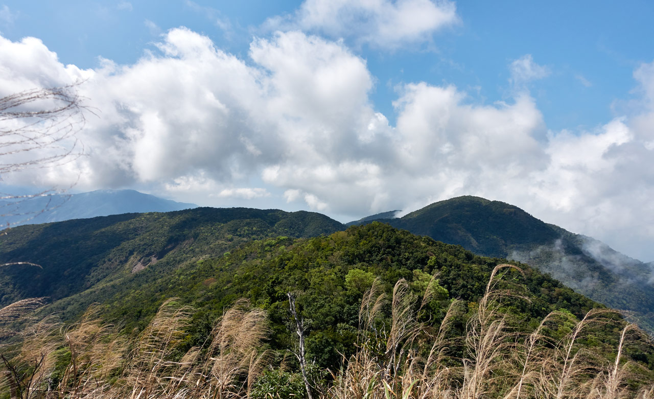 Panoramic shot of mountains and blue sky with white clouds - tall grass in front
