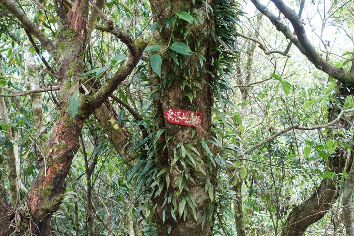 Red sign with Chinese written on it attached to a tree