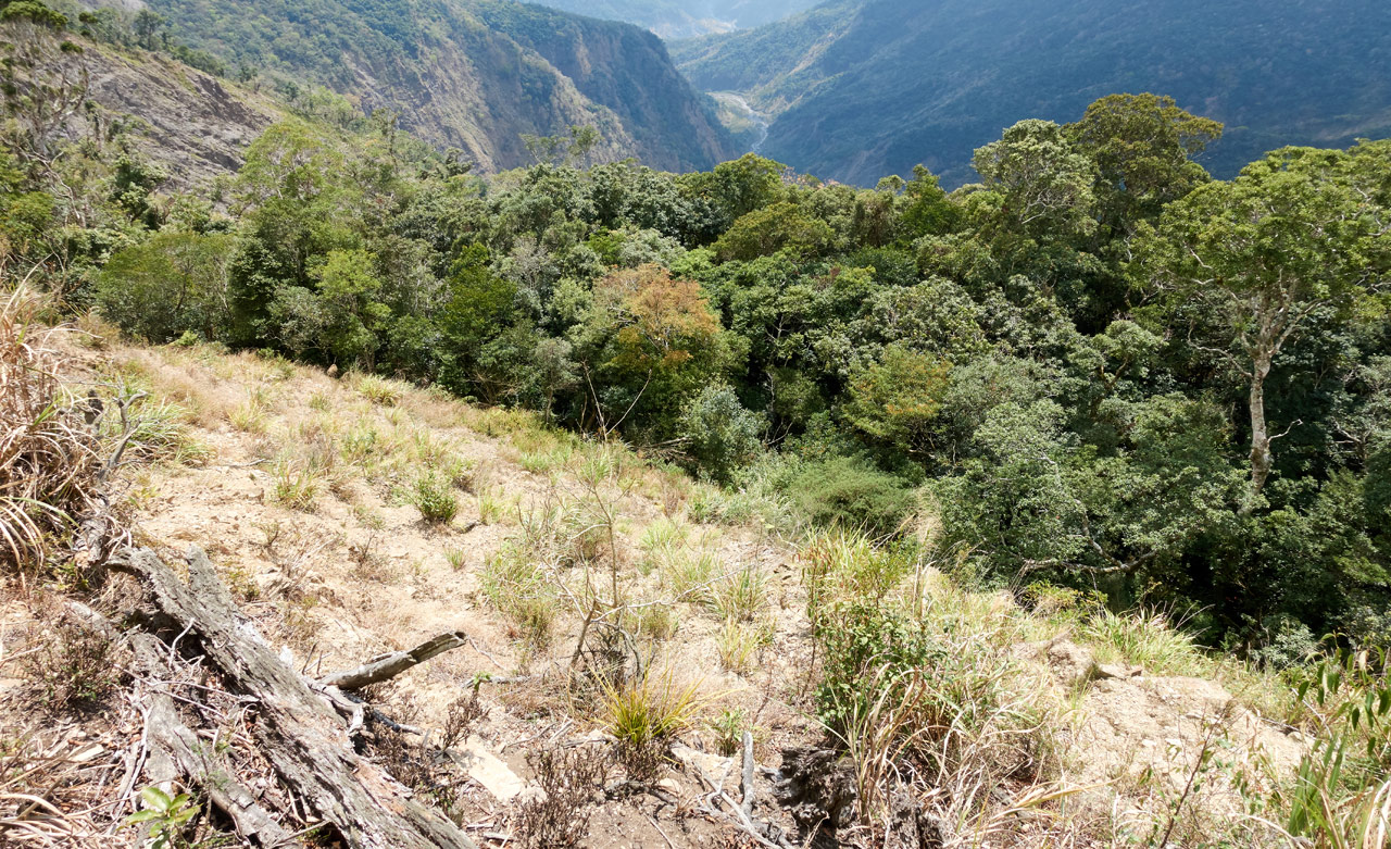 Looking down at old landslide - grass in foreground - lots of trees below - mountains in back