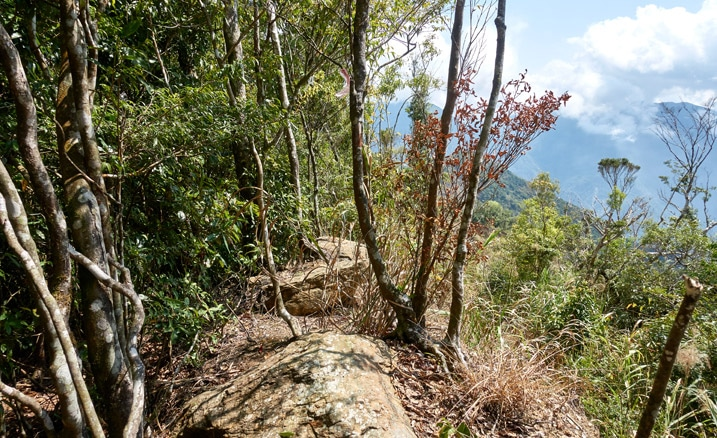 Ridge trail with stones and trees