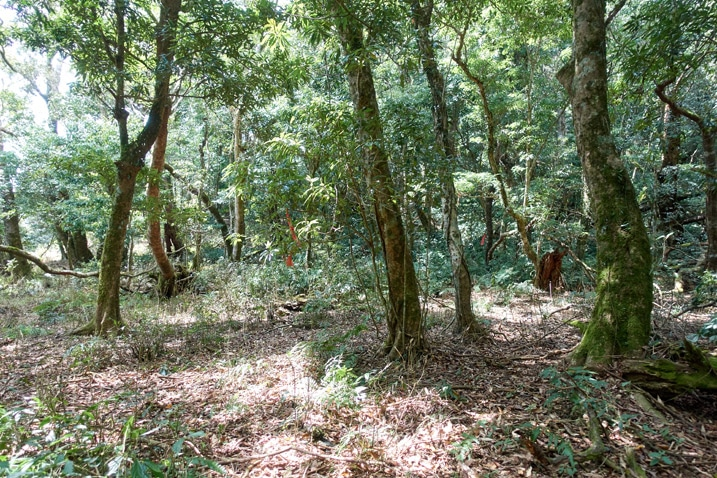 Somewhat open area in forest suitable for camping