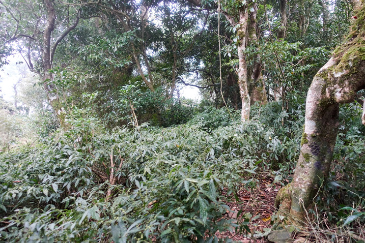 Mountain forest - trees and plants all over - faint trail in center