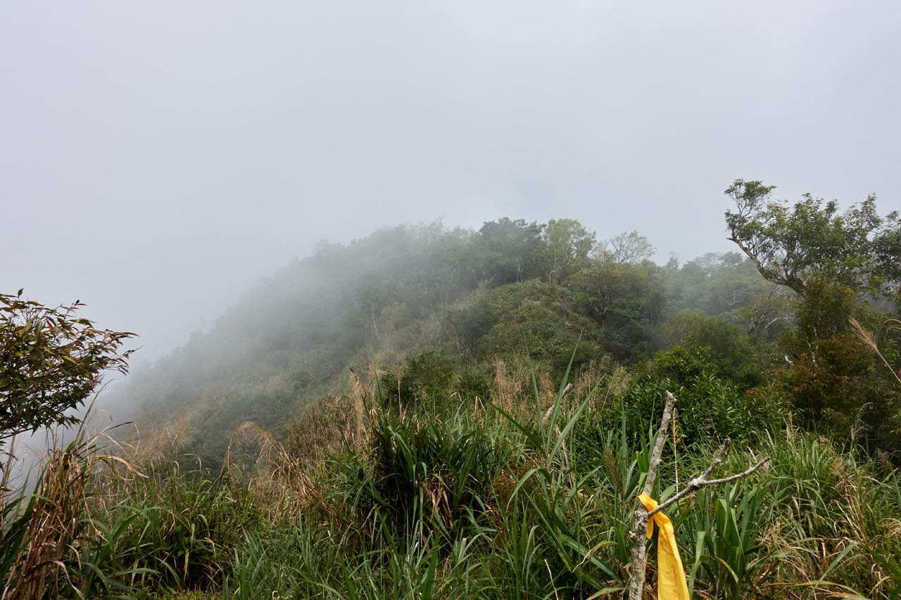 Grassy uphill with fog all around