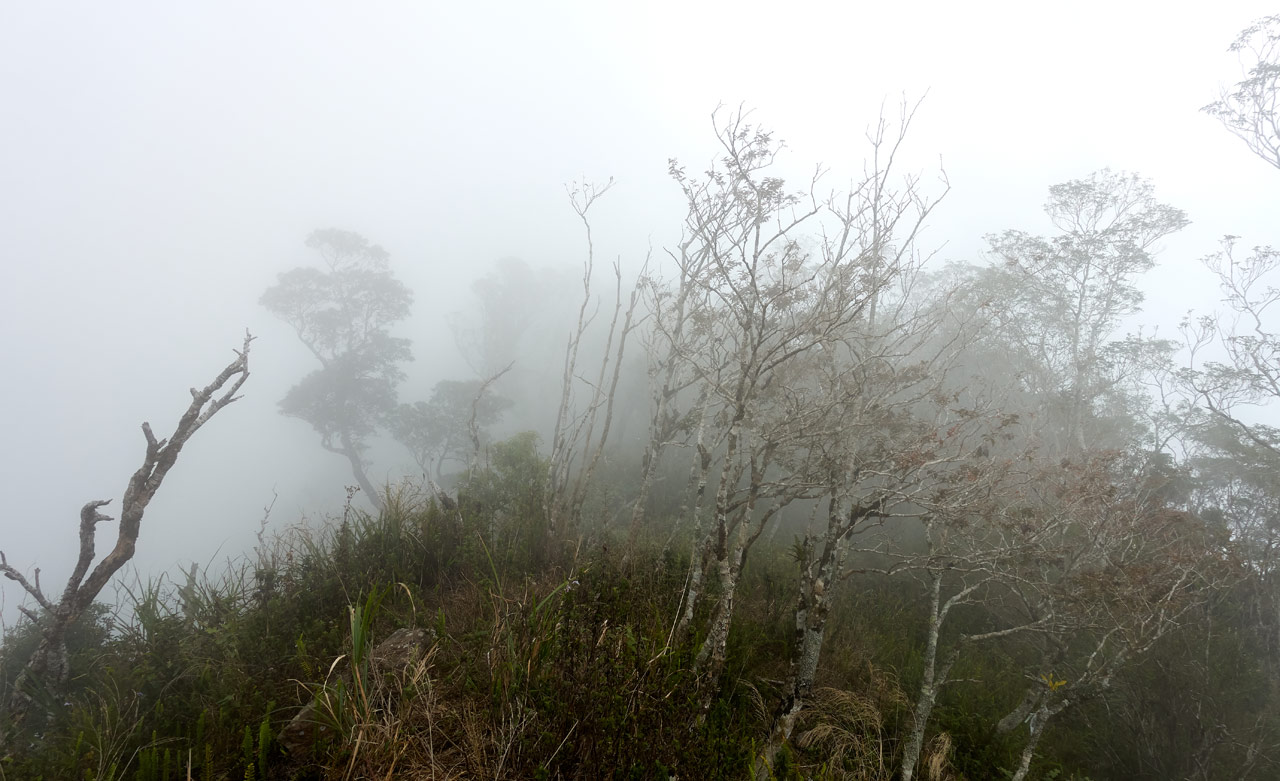 Foggy mountaintop with trees and tall grass