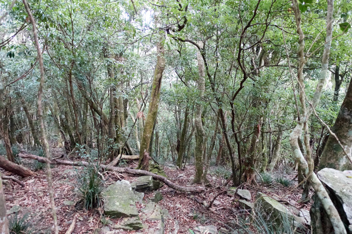 Looking downhill at a mountain forest - trees and rocks