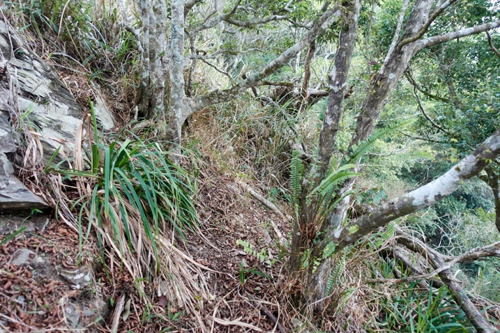 Dense mountain ridge section - trees with trail in middle