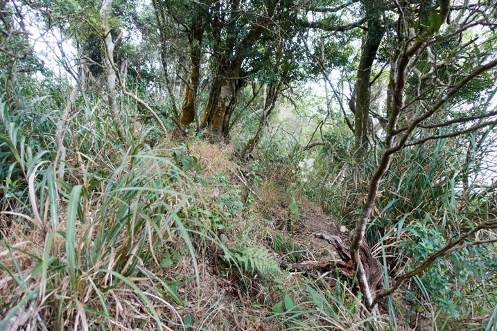 Trees and taller grass - mountain ridge