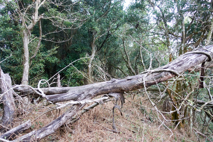 Fallen tree with forest behind