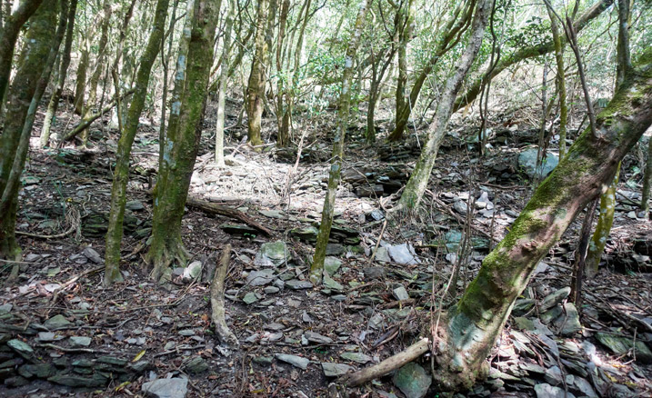 Many purposefully arranged stones on the side of a mountain - trees mixed in