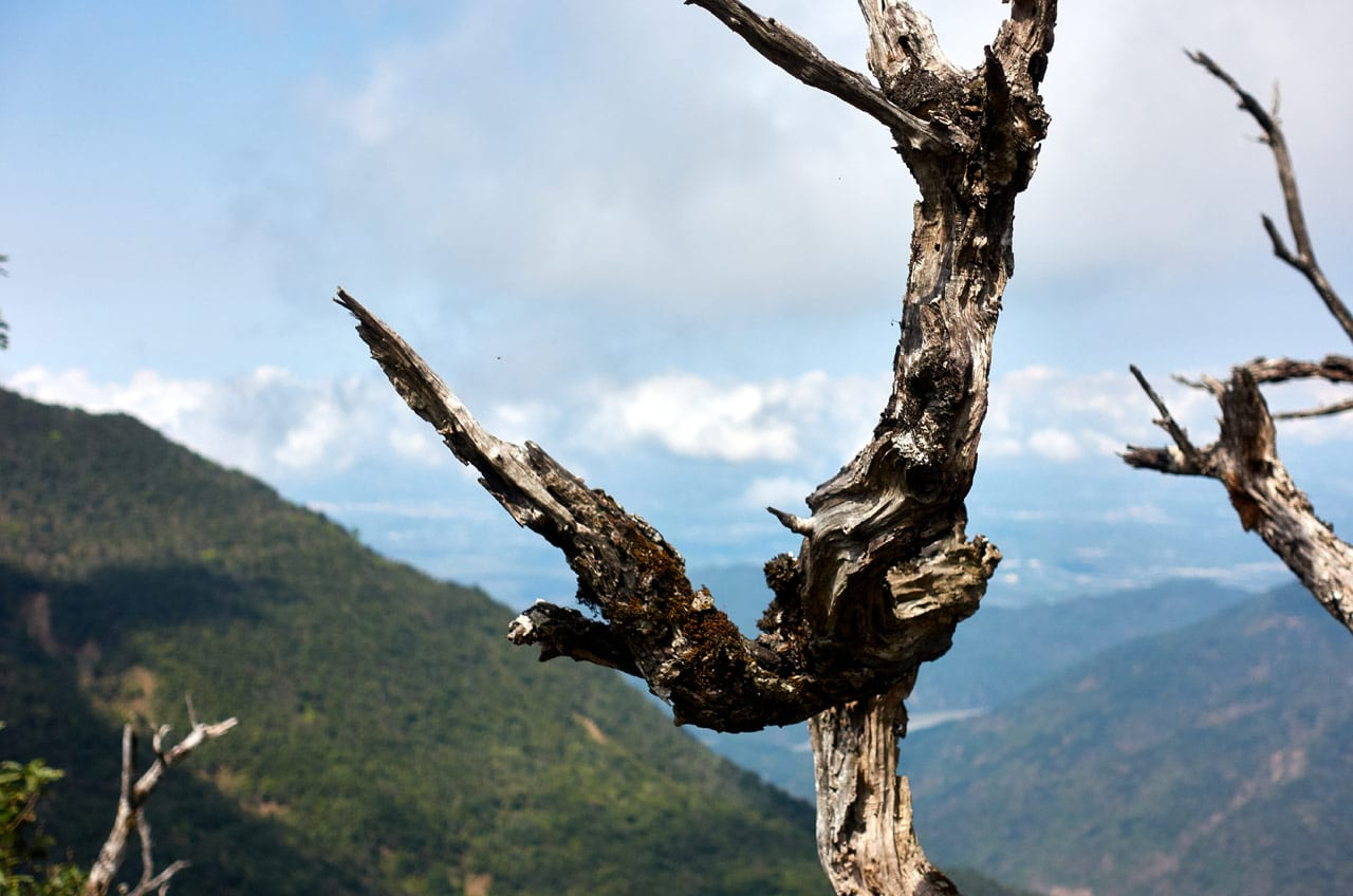 Closeup of dead tree - mountains and river in distance