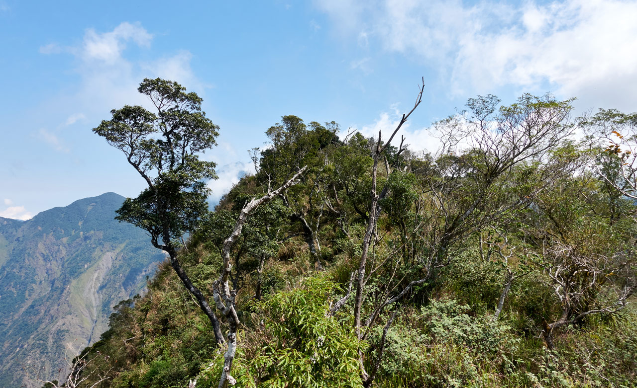 Looking up at nearby mountain peak - trees and plants all over