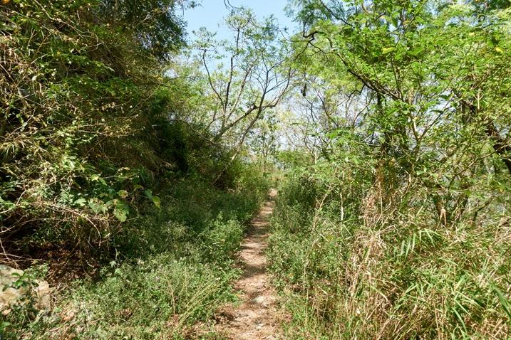 single-track mountain trail