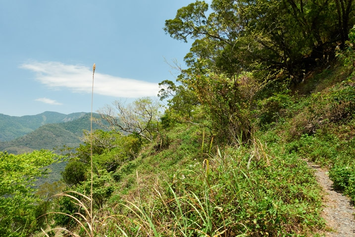 Trail on side of mountain - trees and tall grass - blue sky