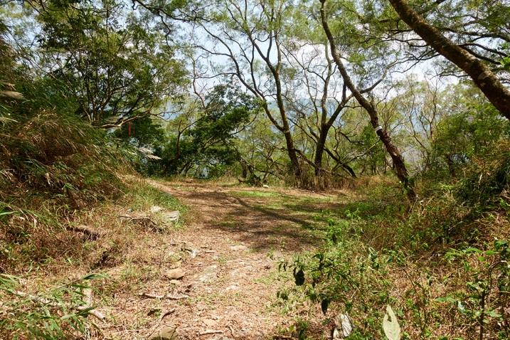 Open area on saddle of mountain - trees all around