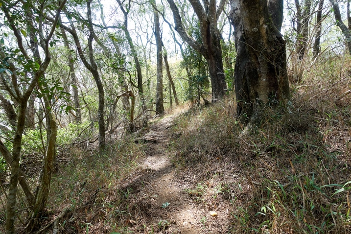Trail going through many trees