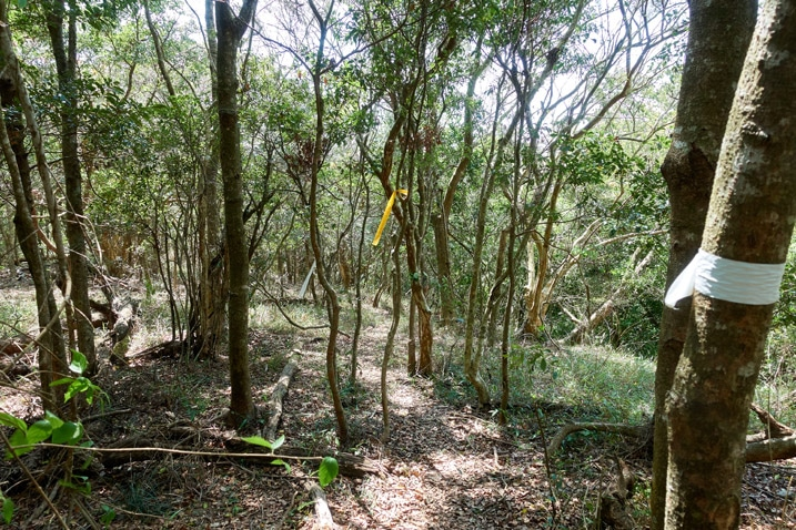 Trail leading through many small trees