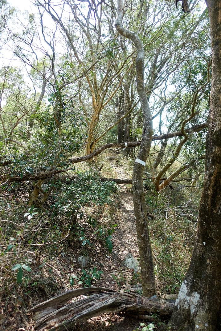 Many trees - white tape wrapped around one tree