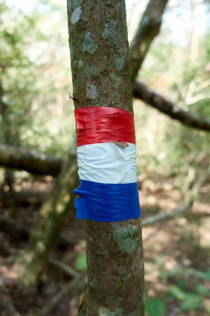 Red, white, and blue tape wrapped around a small tree