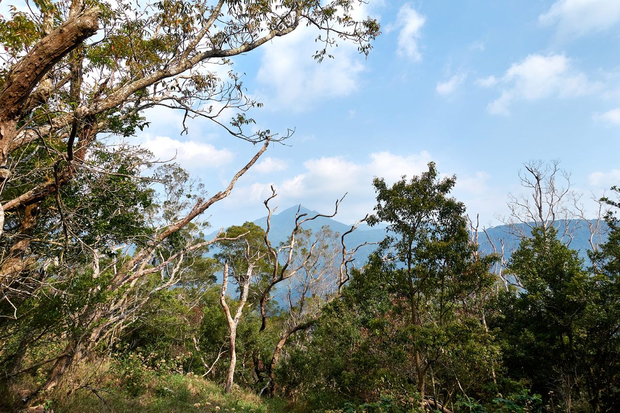 Trees in foreground - blue sky with clouds and some mountains obscured by the trees in background