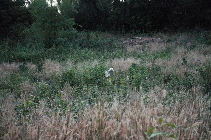 Mannequin hiding within a field of tall grass