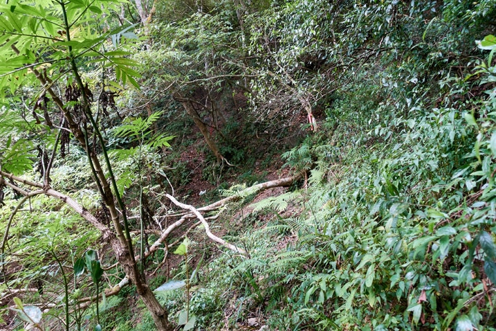 Looking down mountainside at fallen trees and lots of vegetation