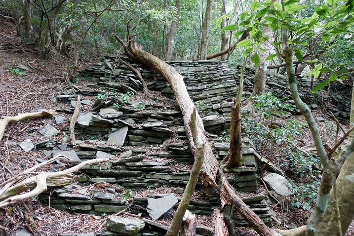 Old stone stairs with fallen tree over length of them