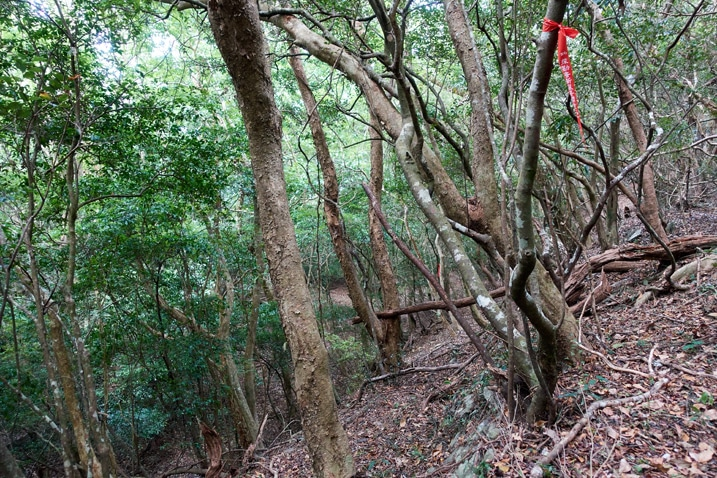 Red ribbon tied to a tree - many trees around - mountainside