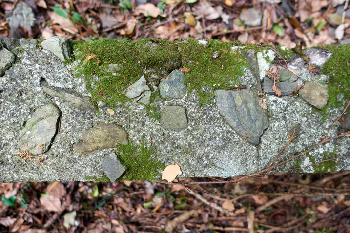 Closeup of old concrete wall - moss on top