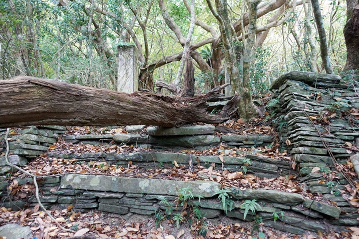 Old stone stairs with large tree fallen on top of them