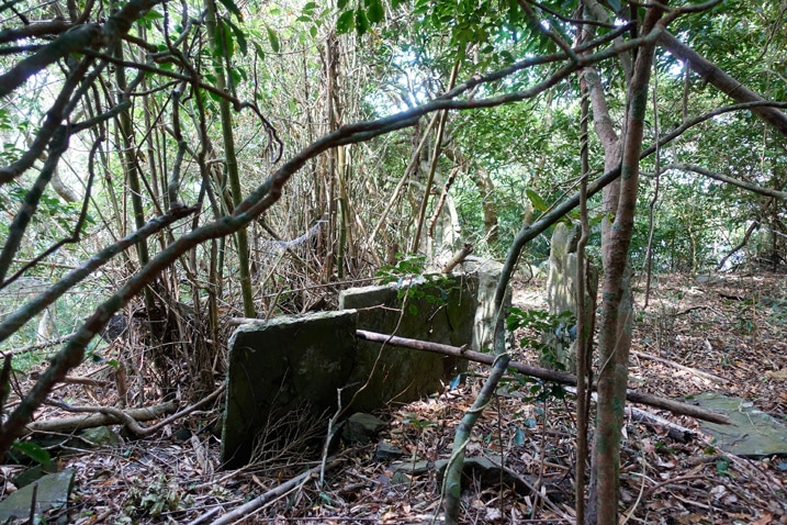 Two tall thin flat stones standing upright with bamboo and other trees around it