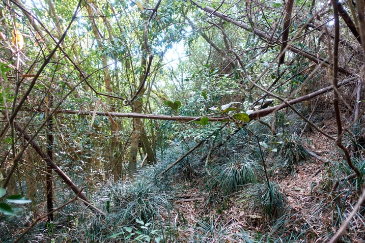 Fallen bamboo trees and plant and tree overgrowth