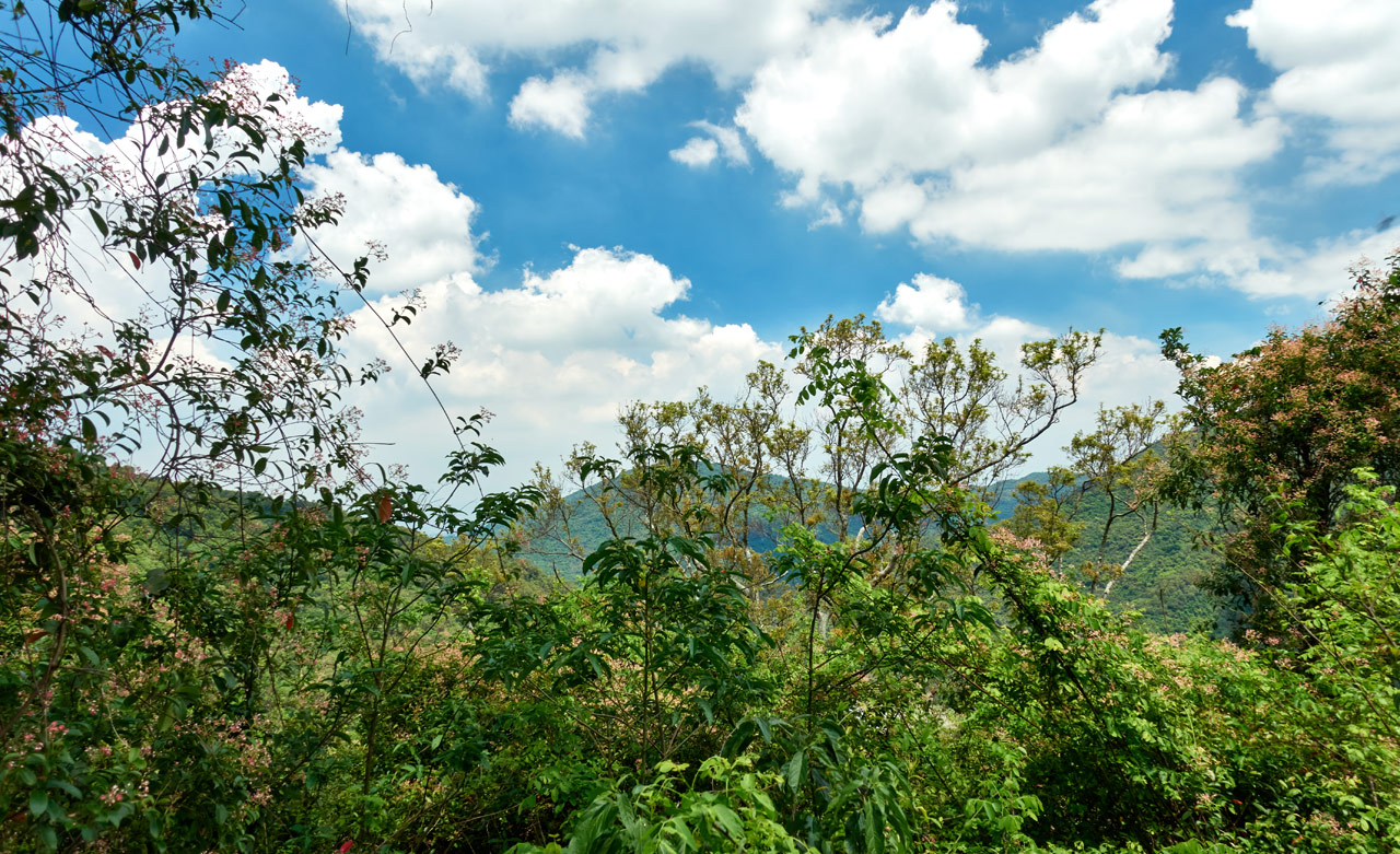 Mountains in distance - blue sky and clouds in sky - trees in foreground