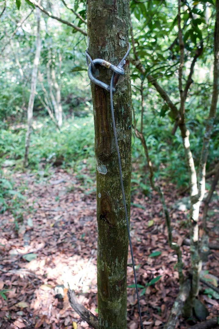 Metal cable attached to tree