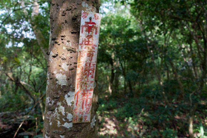 Long, white sign nailed to a tree - Chinese words written on it in red
