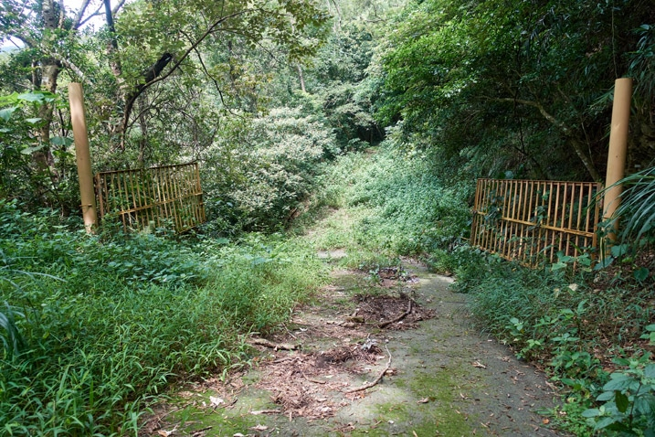 Old open gate - old road and jungle beyond