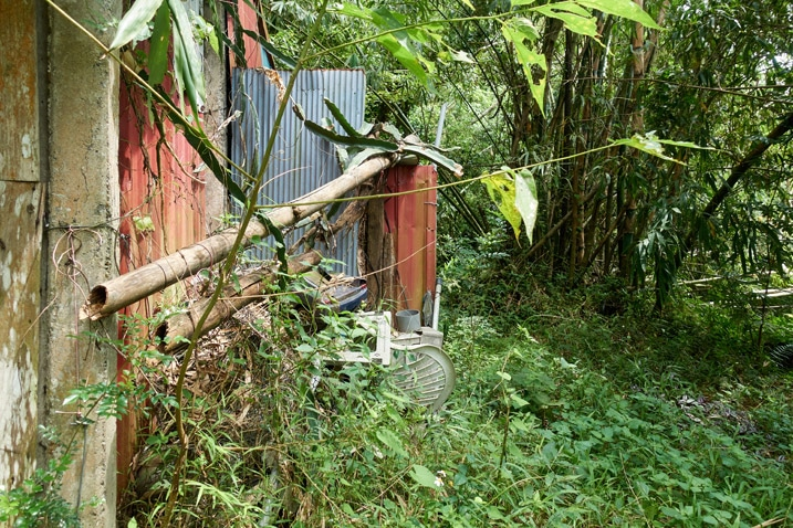 Side of abandoned structure in jungle