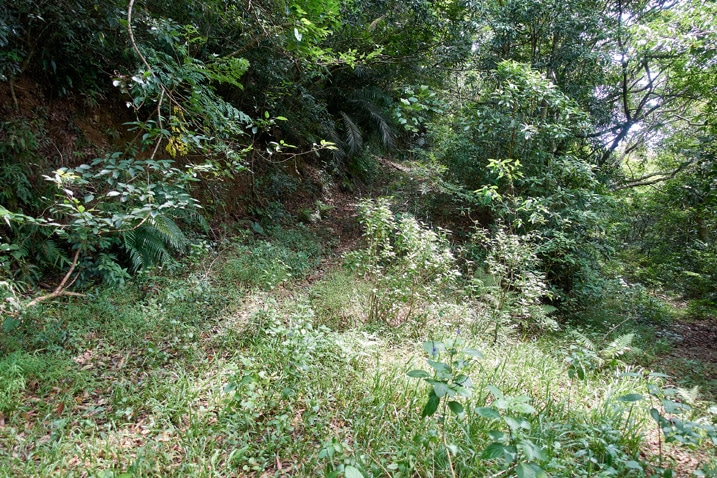 Old mountain road going up - now covered in overgrowth