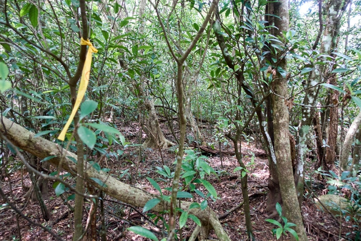Mountain forest - Yellow ribbon tied to a tree