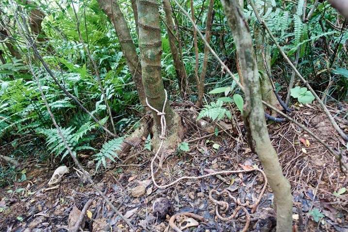 Rope from snare trap on ground