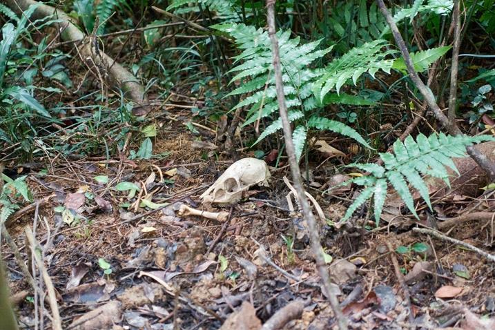 Animal skull and bones on ground