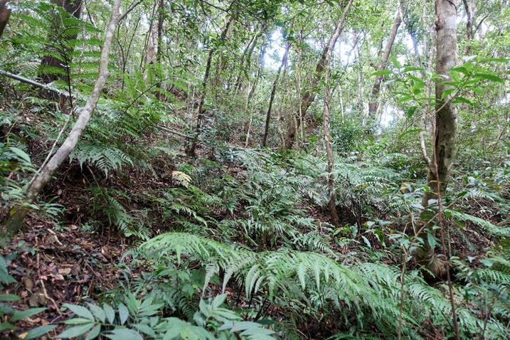 Looking up mountainside - many trees and plants - old PVC pipe