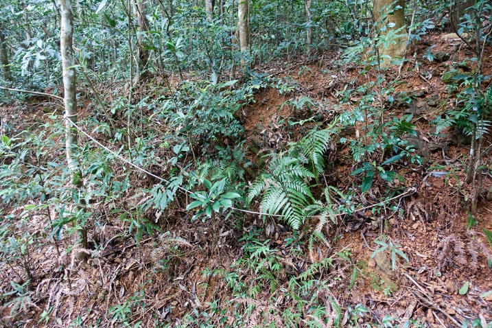 Snare trap hidden on mountainside - rope in plain view