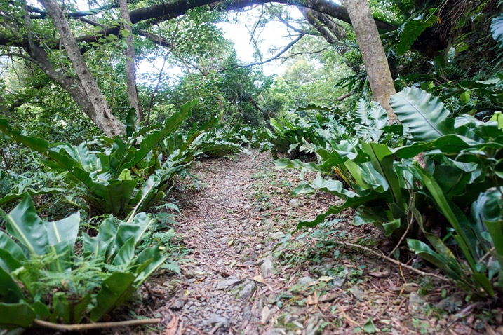 Path in mountains with trees and plants on either side