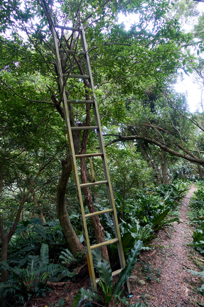 Ladder leaning against tree in mountains
