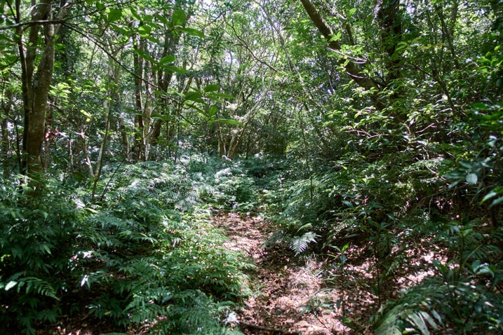 Old mountain road - overgrown - trees all over