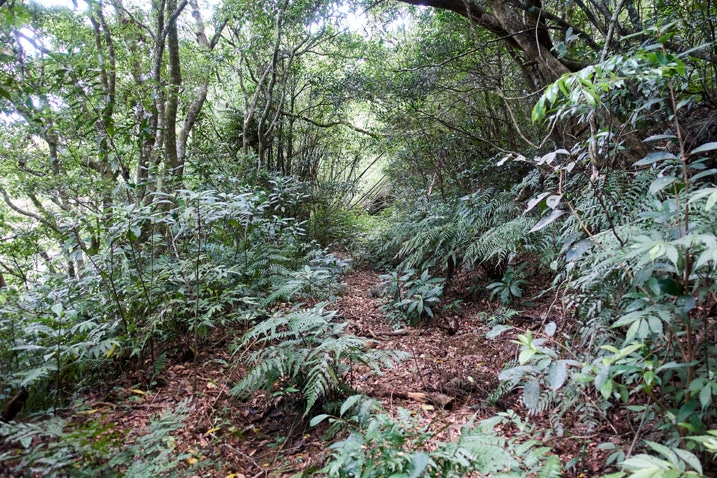 Old mountain road with plants and trees all over