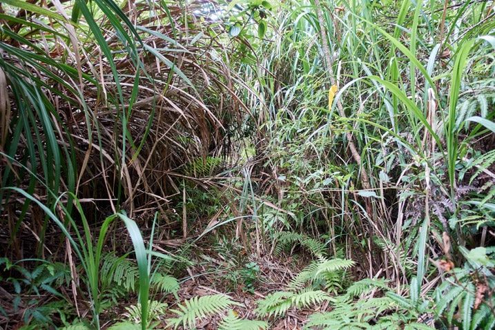 Overgrown road with tall grass