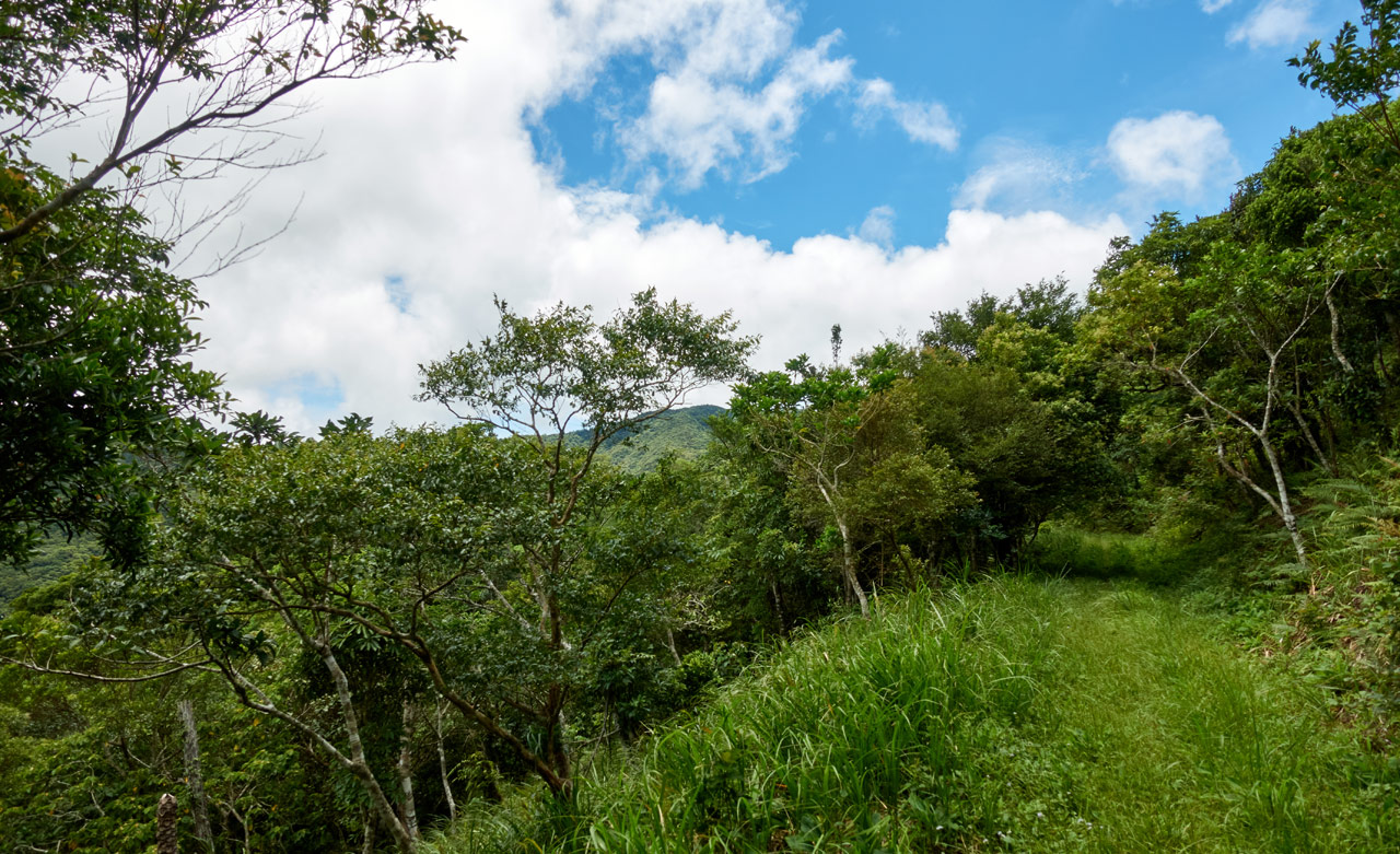 Old mountain road - grassy - trees - blue sky and clouds