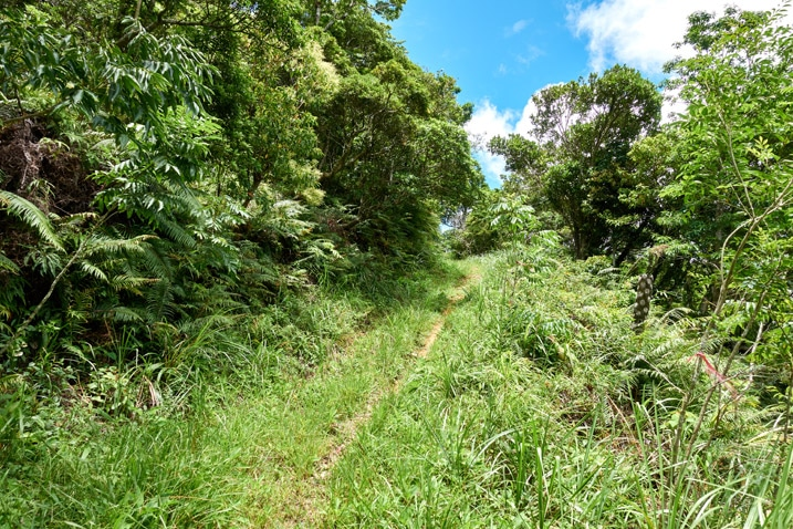 Old mountain road - grassy with tire tracks - trees either side - blue sky and clouds